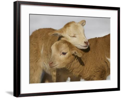 Little Lambs-Ryan Courson Photography-Framed Art Print