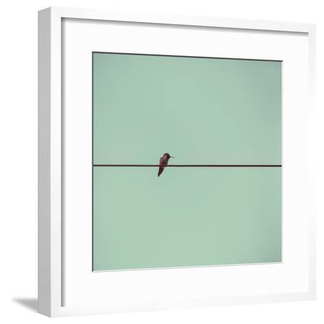 Hummingbird on a Wire-(C) Maite Pons-Framed Art Print