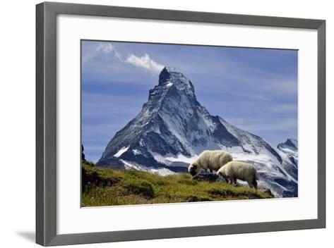 Matterhorn with Sheep from Hohbalmen-pierre hanquin photographie-Framed Art Print