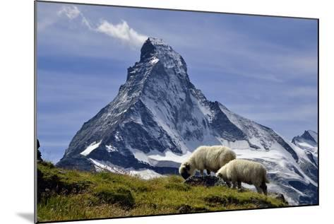 Matterhorn with Sheep from Hohbalmen-pierre hanquin photographie-Mounted Photographic Print