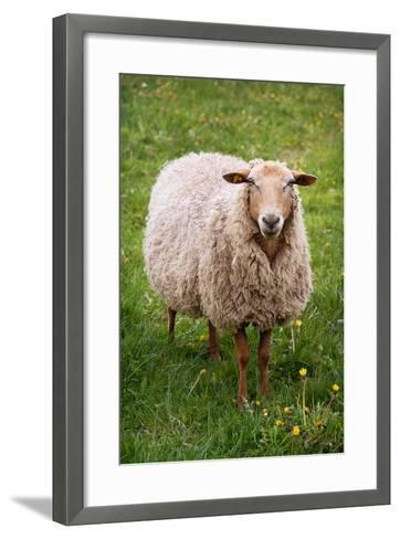 Looking into Camera-photo by Stefanie Senholdt-Framed Art Print