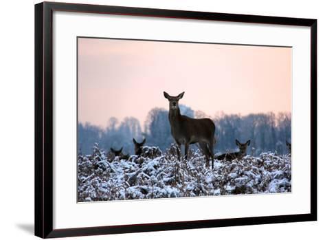 Deers in Bushi Park-Alessio Gaggioli photography-Framed Art Print