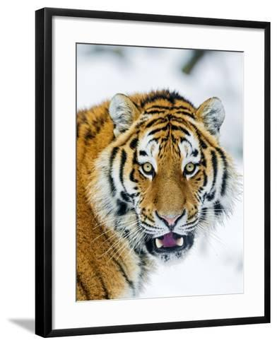 A Nice Portrait-Picture by Tambako the Jaguar-Framed Art Print