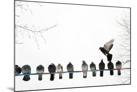 Row of Pigeons on Wire-Ernest McLeod-Mounted Photographic Print
