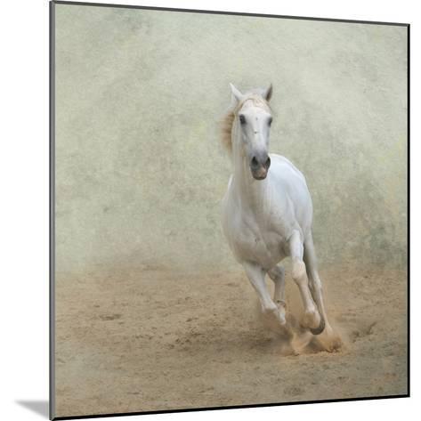 White Lusitano Horse Galloping-Christiana Stawski-Mounted Photographic Print