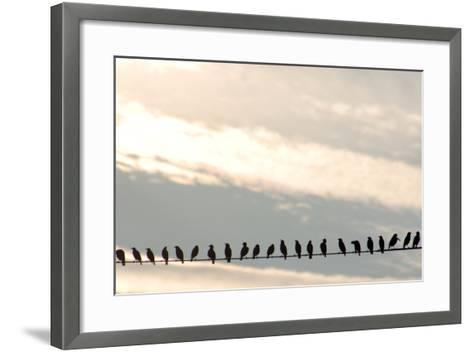 Birds on a Wire-Jessica Kiser-Framed Art Print