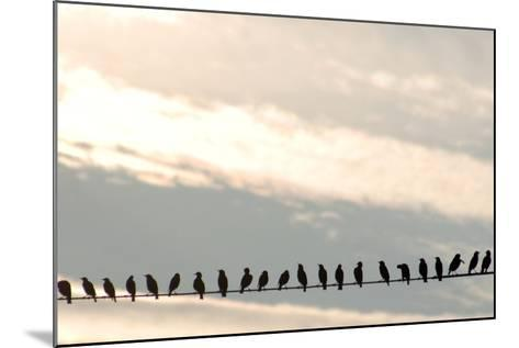 Birds on a Wire-Jessica Kiser-Mounted Photographic Print
