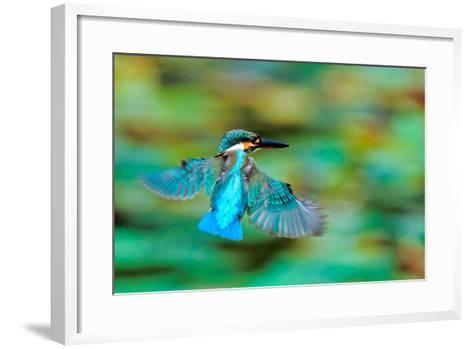 Common Kingfisher-Sunnyha Images-Framed Art Print
