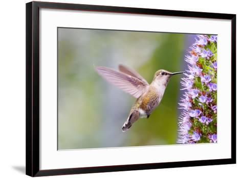 Bird-Mythungoc Photography-Framed Art Print