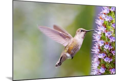 Bird-Mythungoc Photography-Mounted Photographic Print