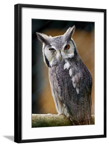 Winking Owl-Picture by Tambako the Jaguar-Framed Art Print