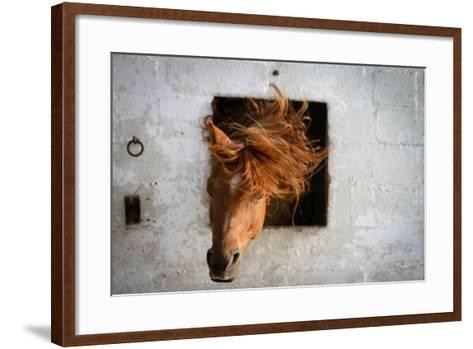 Horse Shaking His Head-Photography taken by Ivan Dupont-Framed Art Print
