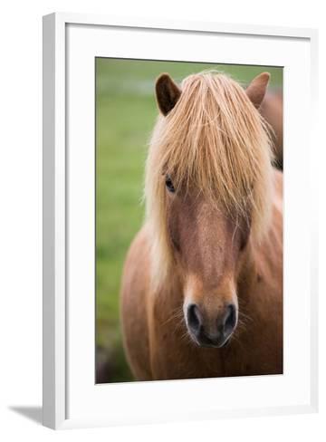 Icelandic Horse, Iceland-Mint Images/ Art Wolfe-Framed Art Print