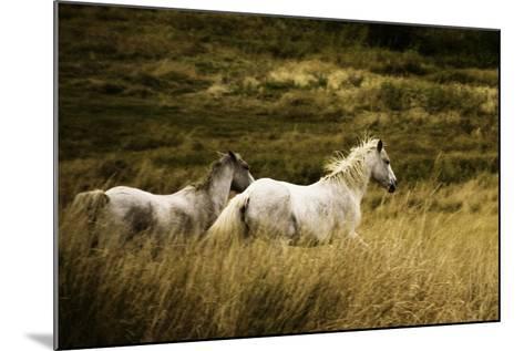 Colorado Horses-Mary Hockenbery-Mounted Photographic Print