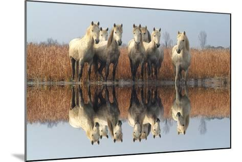 Camargue Horses-M G Therin Weise-Mounted Photographic Print