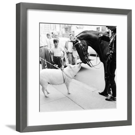 Pig and the Horse-Ecell-Framed Art Print