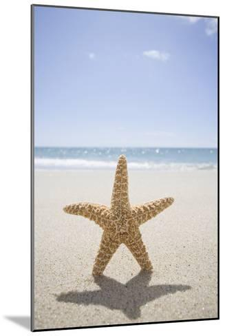 Usa, Massachusetts, Cape Cod, Nantucket, close up of Starfish on Sand-Chris Hackett-Mounted Photographic Print