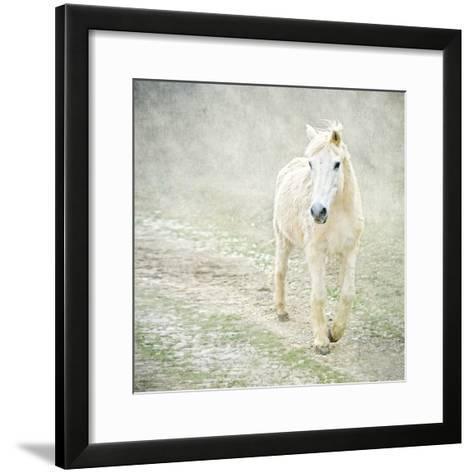 White Horse Walking along Stony Path-Christiana Stawski-Framed Art Print