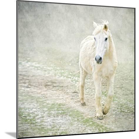 White Horse Walking along Stony Path-Christiana Stawski-Mounted Photographic Print