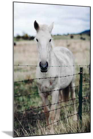 White Horse-Rafael Elias-Mounted Photographic Print
