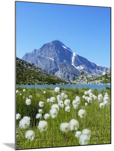 Cotton Grass and Monte Leone-Fabio Bianchi Photography-Mounted Photographic Print