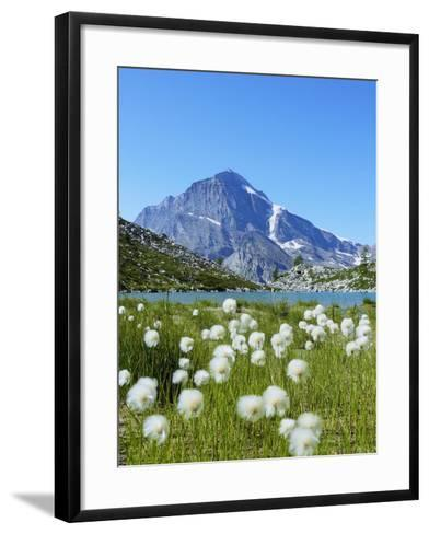 Cotton Grass and Monte Leone-Fabio Bianchi Photography-Framed Art Print
