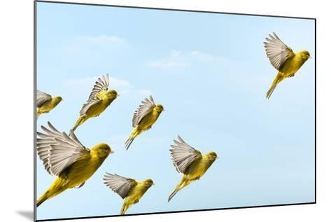 Yellow Bird Flying In-Front and Higher than Others-PIER-Mounted Photographic Print