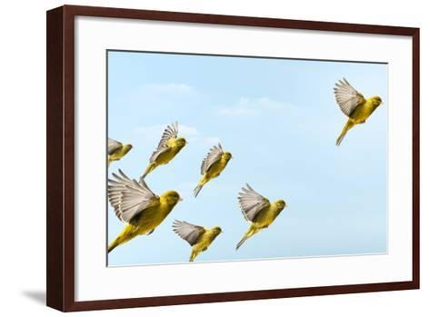 Yellow Bird Flying In-Front and Higher than Others-PIER-Framed Art Print