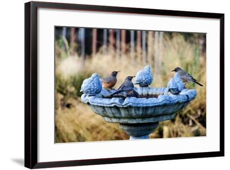 Robins on Birdbath-Barbara Rich-Framed Art Print