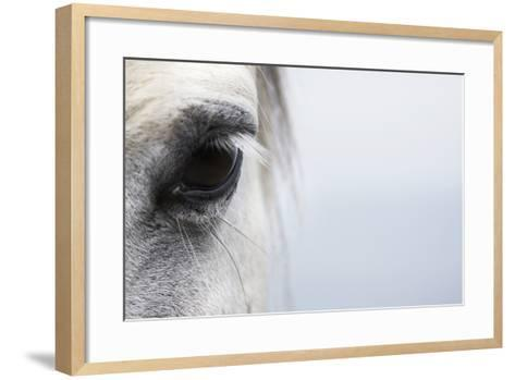 High-Key close up of a Welsh Section A Pony-Andrew Bret Wallis-Framed Art Print