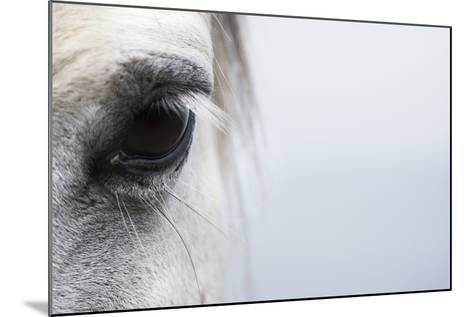High-Key close up of a Welsh Section A Pony-Andrew Bret Wallis-Mounted Photographic Print