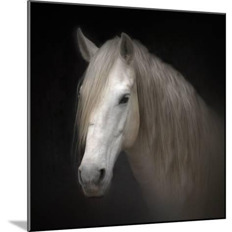 White Horse on Black-Christiana Stawski-Mounted Photographic Print