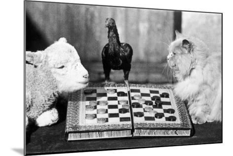 Animal Draughts-Fox Photos-Mounted Photographic Print