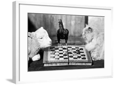 Animal Draughts-Fox Photos-Framed Art Print
