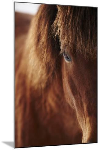 Close-Up of Horse Eye-Johner Images-Mounted Photographic Print