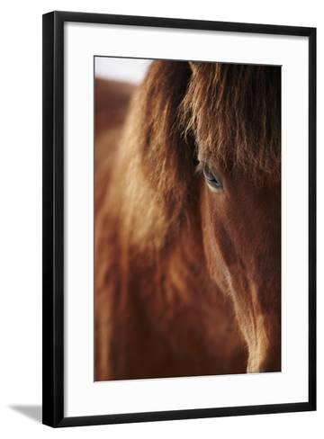 Close-Up of Horse Eye-Johner Images-Framed Art Print