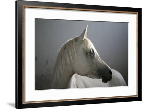 Arabian Horse-Photo by Eman Jamal-Framed Art Print