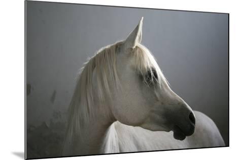 Arabian Horse-Photo by Eman Jamal-Mounted Photographic Print