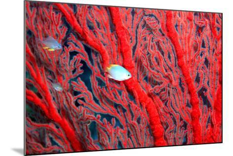 Coral-John Foxx-Mounted Photographic Print