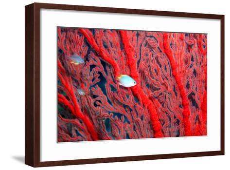 Coral-John Foxx-Framed Art Print