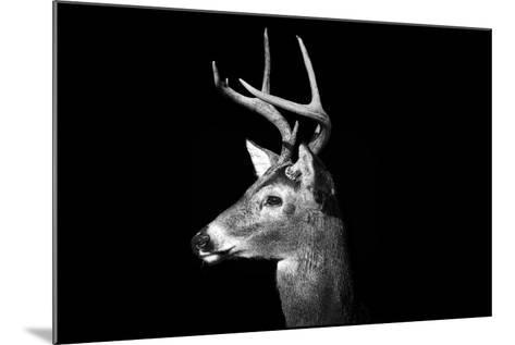 Buck in Black and White-Malcolm MacGregor-Mounted Photographic Print