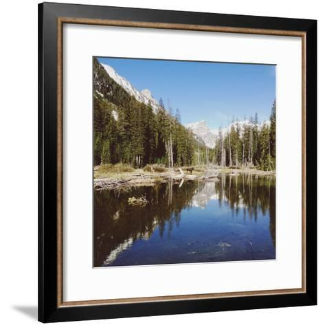Two Moose and Trees-Kevin Russ-Framed Art Print