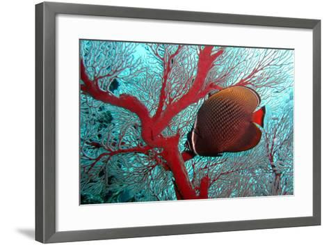 Sea Fan and Butterflyfish-takau99-Framed Art Print