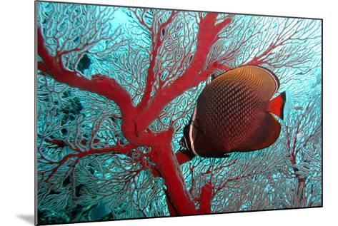 Sea Fan and Butterflyfish-takau99-Mounted Photographic Print