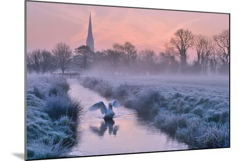 Salisbury Water Meadows-Andreas Jones-Mounted Photographic Print