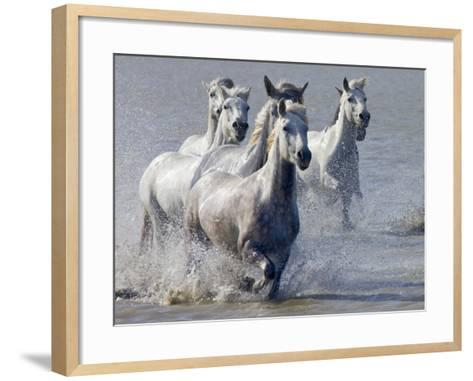 Camargue Horses, France-Keren Su-Framed Art Print