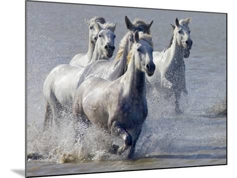 Camargue Horses, France-Keren Su-Mounted Photographic Print