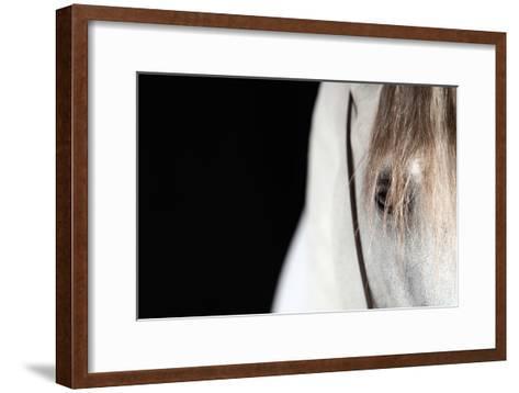 Horse Face Close-Up-Monica Rodriguez-Framed Art Print