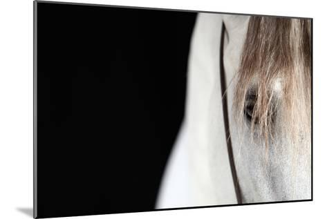 Horse Face Close-Up-Monica Rodriguez-Mounted Photographic Print