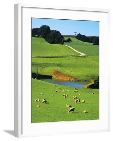 Ewes and Lambs Grazing at Thorpdale, Strzelecki Ranges, West Gippsland, Victoria, Australia-Peter Walton Photography-Framed Art Print